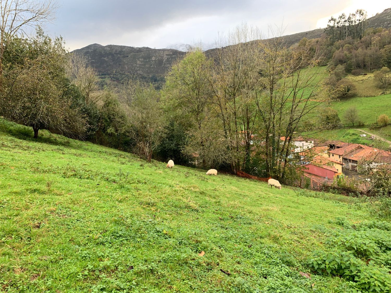 Terreno en Venta en Calle Vibaño , Área de Llanes, Asturias  REF:93847880